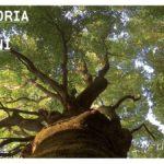 Listone Giordano Las Fontaines cykl życia lasu