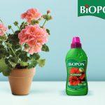 Biopon płyn pelargonie