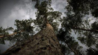 Kadr z filmu Odkrywanie leśnych tajemnic POL-SKONE, Odpowiedzialna gospodarka leśna — odc. 6